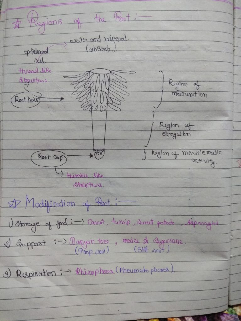 Chapter 5 morphology of flowering plants part 2