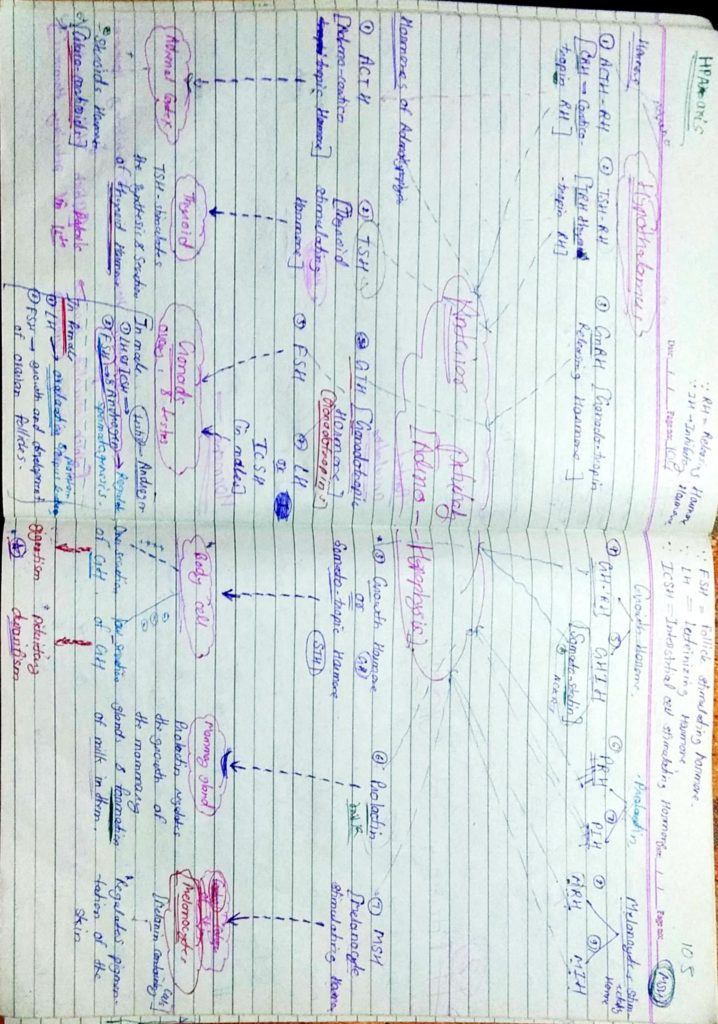 Chemical coordination and Integration part1 (2)