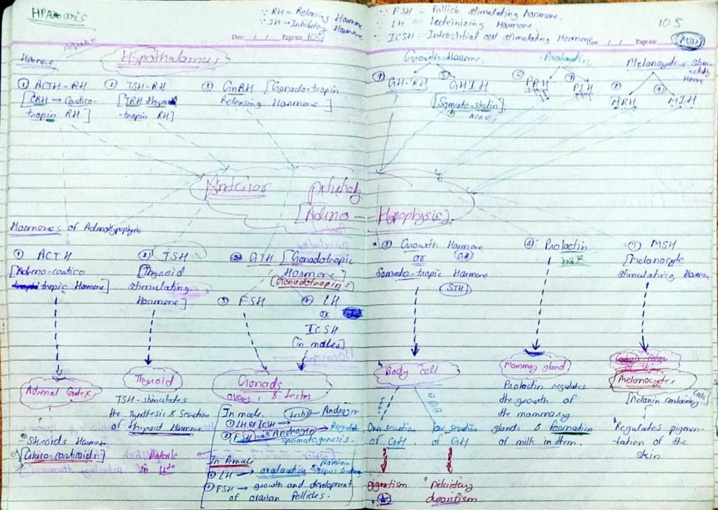 Chemical coordination and Integration part1 (3)
