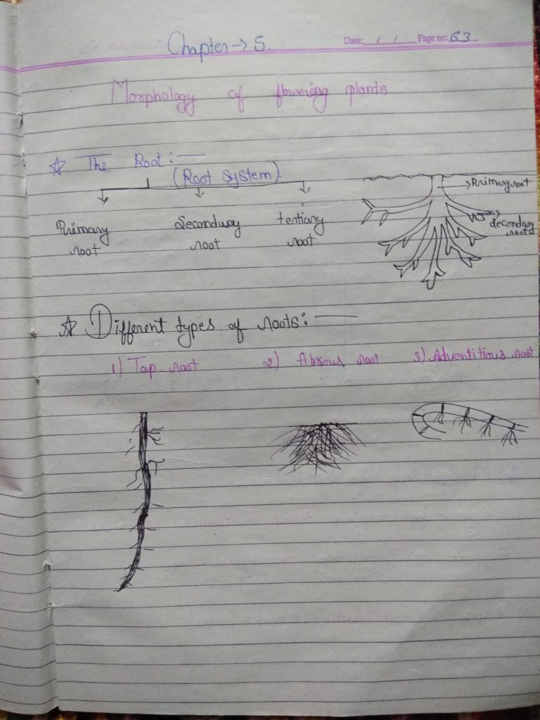 Chapter 5 morphology of flowering plants part 1