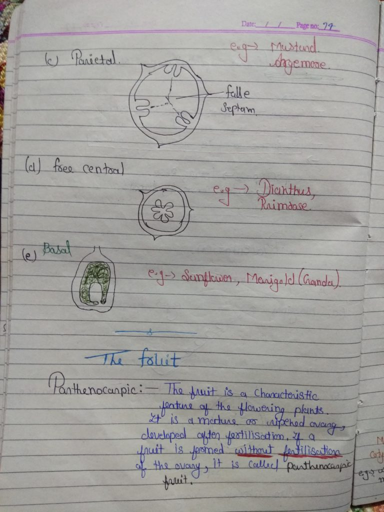 Chapter 5 morphology of flowering plants part 12