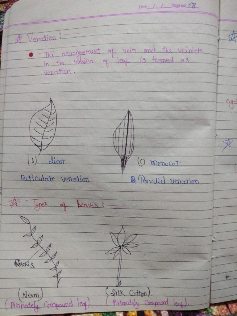 Chapter 5 morphology of flowering plants part 6