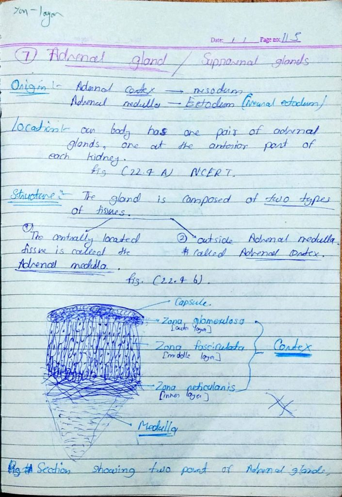Chemical coordination and Integration part3 (1)